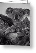 Koala Greeting Card by Chris Flees