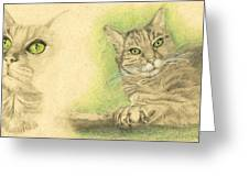 Kobi Study Greeting Card by Marcianna Howard