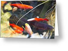 Koi Pond The Symbol Of Love And Friendship Greeting Card by Artist and Photographer Laura Wrede