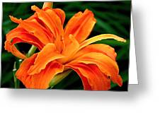 Kwanso Lily Greeting Card by Rona Black