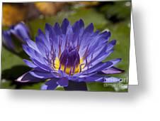 La Fleur De Lotus - Star Of Zanzibar Tropical Water Lily Greeting Card by Sharon Mau