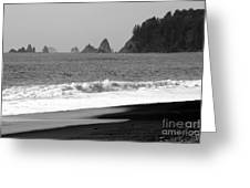 La Push Beach Black And White Greeting Card by Carol Groenen