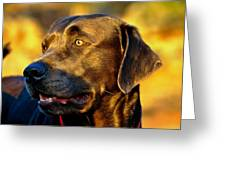 Lab Puppy At Sunset Greeting Card by Kristina Deane