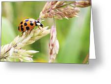 Lady Bug on a Warm Summer Day Greeting Card by Andrew Pacheco