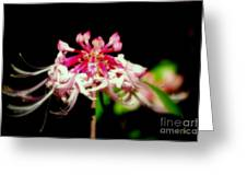 Lady Slipper Greeting Card by Michael Hoard