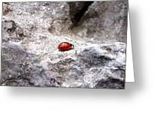 Ladybird Greeting Card by Lucy D