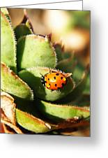 Ladybug And Chick Greeting Card by Chris Berry