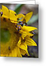 Ladybugs Close Up Greeting Card by Garry Gay