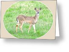 Lake Country Doe   Greeting Card by Will Borden