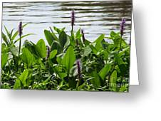 Lake Day Greeting Card by Andrea Anderegg
