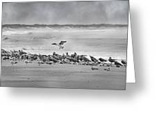 Landing In A Blur Greeting Card by Betsy C  Knapp