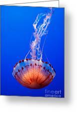 Large Colorful Jellyfish Atlantic Sea Nettle Chrysaora Quinquecirrha Greeting Card by Jamie Pham