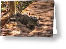 Large Iguana Greeting Card by Dan Friend