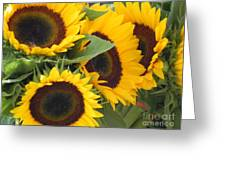 Large Sunflowers Greeting Card by Chrisann Ellis