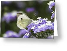 Large White Pieris Brassicae Greeting Card by Eyal Bartov