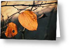 Last Leaves Greeting Card by Taylan Soyturk