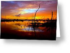 Last Light Greeting Card by Tracy Welker