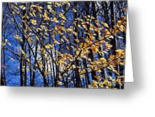 Late Fall Greeting Card by Elena Elisseeva