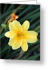 Late Summer Lily Greeting Card by James Hammen