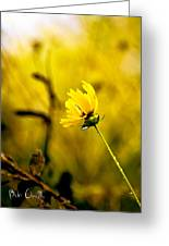 Late Summer Rain From The Forest Floor Greeting Card by Bob Orsillo