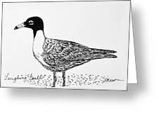 Laughing Gull Greeting Card by Becky Mason