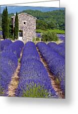 Lavender Farm Greeting Card by Bob Phillips