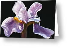 Lavender Iris On Black Greeting Card by Sharon Freeman