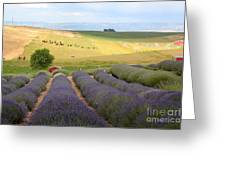 Lavender Valley Greeting Card by Carol Groenen