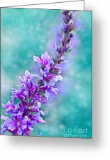 Lavender Greeting Card by Viaina
