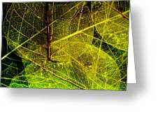 Layers Of Leaves Greeting Card by Bonnie Bruno