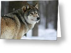 Leader Of The Pack Greeting Card by Inspired Nature Photography By Shelley Myke