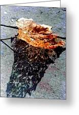 Leaf Lace Greeting Card by Michael Hoard