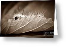 Leaf Muncher Greeting Card by Luke Moore