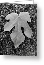 Leaf On Bark Greeting Card by Andrew Brooks