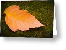 Leaf On Moss Greeting Card by Adam Romanowicz