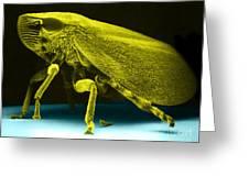 Leafhopper, Sem Greeting Card by David M. Phillips