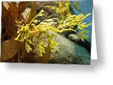 Leafy Sea Dragon Greeting Card by Shane Kelly