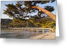Leaning Pine Tree Arashiyama Kyoto Japan Greeting Card by Colin and Linda McKie