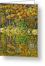 Leaning Trees Greeting Card by Frozen in Time Fine Art Photography
