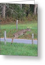 Leaping Buck In Smoky Mountains Greeting Card by Dan Sproul