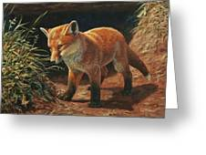 Red Fox Pup - Learning Greeting Card by Crista Forest