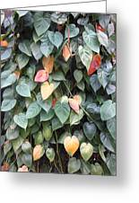 Leaves Greeting Card by Cherie Sexsmith