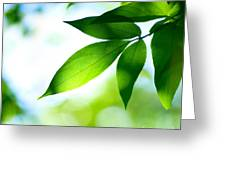 Leaves Green Greeting Card by Boon Mee