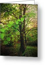 Leaves In My Hair Greeting Card by Laurie Search