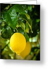 Lemon Down The Rain Greeting Card by Tetyana Kokhanets
