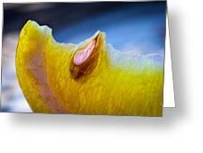 Lemon Seed Greeting Card by Bob Orsillo