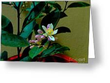 Lemon Tree Flower Greeting Card by Al Bourassa