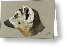 Lemur Head Study Greeting Card by Juan  Bosco