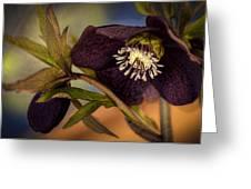 Lenten Rose Hellebore Floral Greeting Card by Julie Palencia