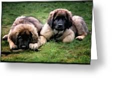 Leonberger Puppies Greeting Card by Gun Legler
